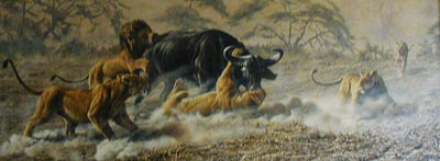 Lions Attacking Buffalo - Painting by Alan Hunt